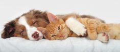 Seguro para gatos, perros y mascotas Sevilla MundoSeguros